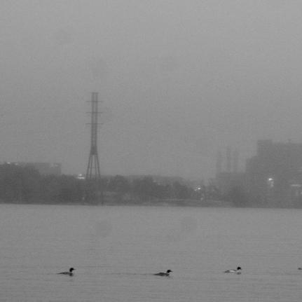 Reflet aux canards, Helsinki, Finlande (novembre 2011)