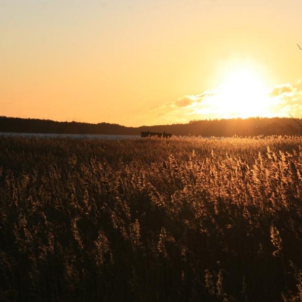 Lever de soleil sur les Ålands, Finlande (novembre 2011)