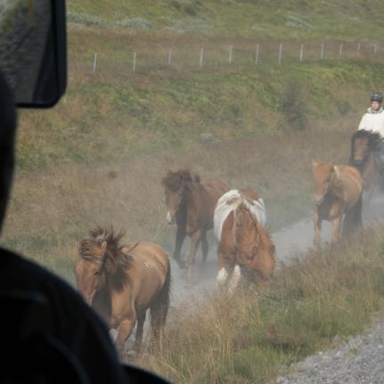 Chevaux islandais depuis le bus, Islande, septembre 2012