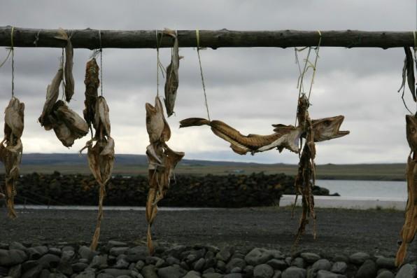 Poissons séchés, Islande, septembre 2012