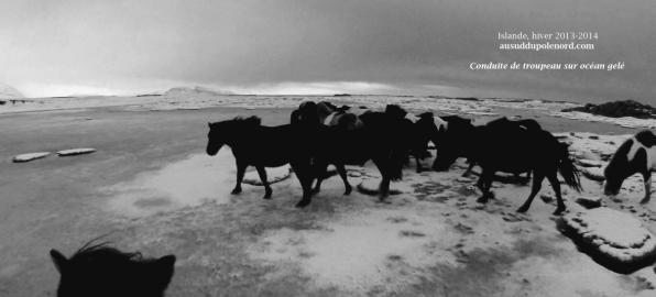 chevaux dans l'ocean geleNB