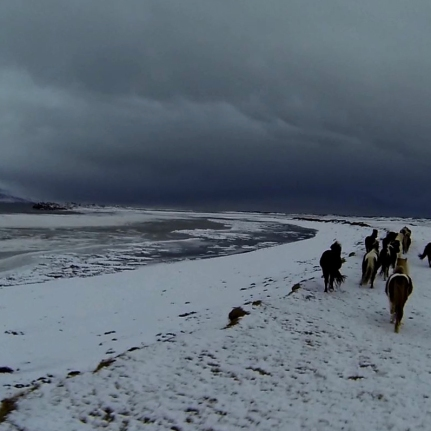 troupeau chevaux glace