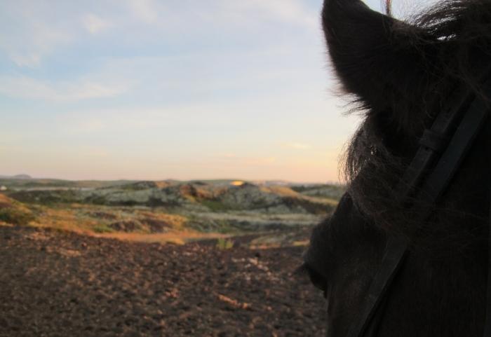 Islande rando a cheval