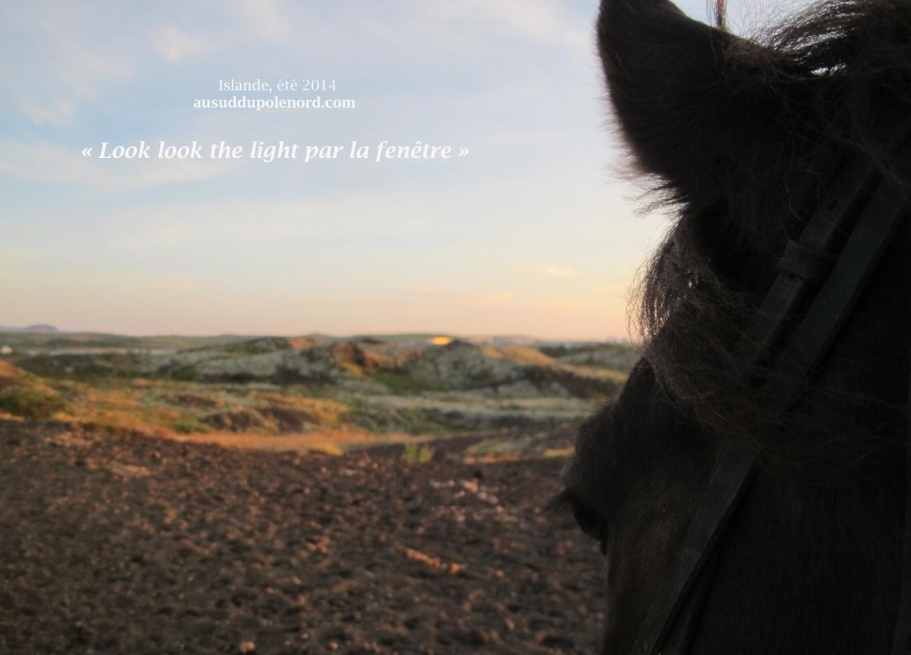 rando islande cheval moli