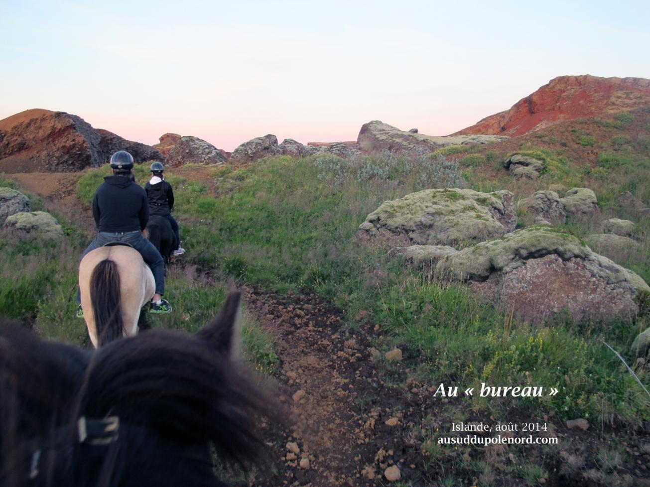 Travail en islande cheval