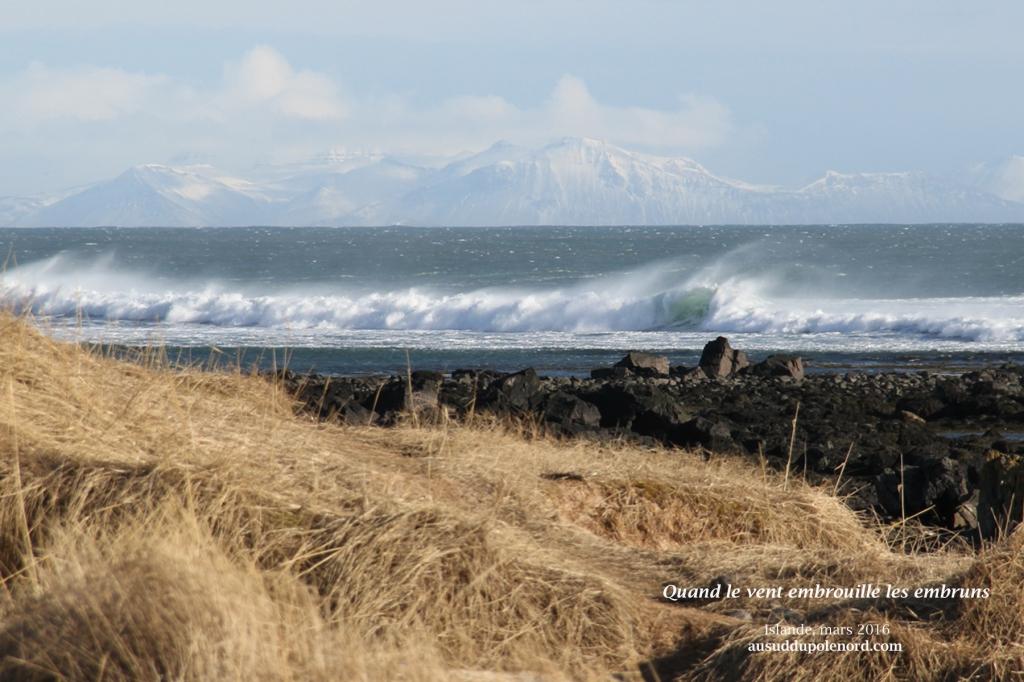Islande vent et vagues printemps