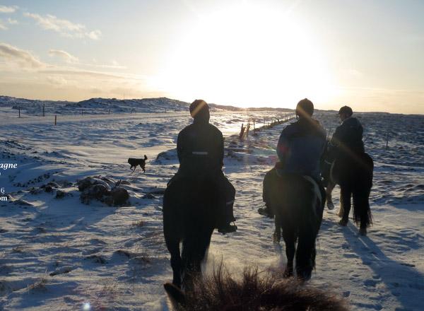 campagne-islande-cheval-1