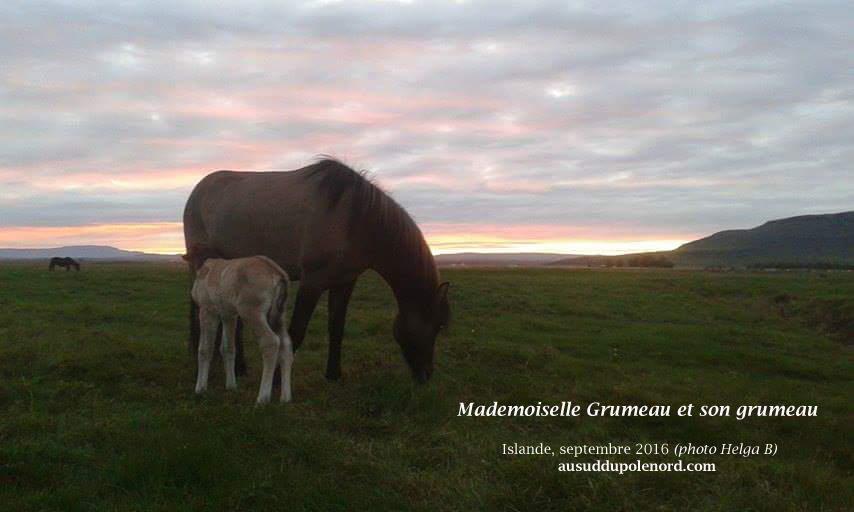 cheval-islande-couche-de-soleil