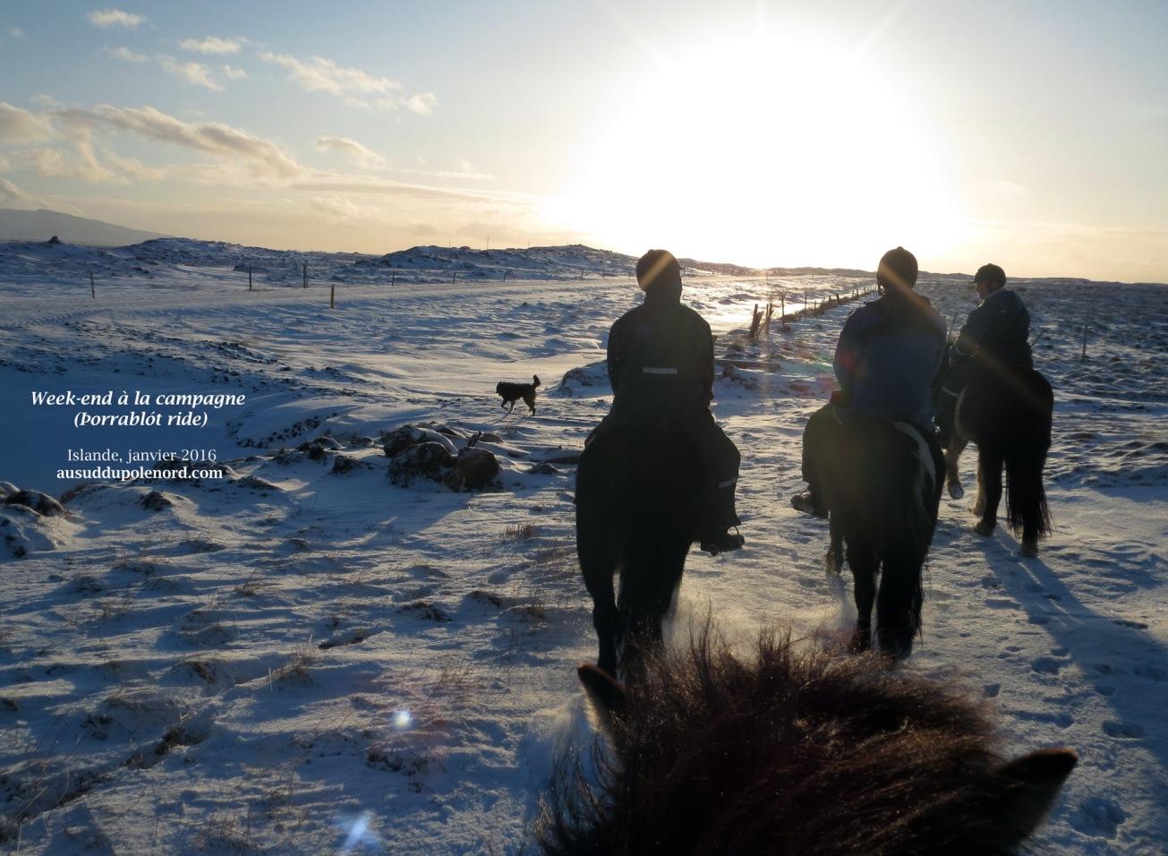 week-end-islande-cheval