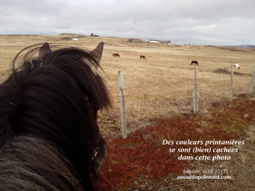 printemps islande couleurs cheval